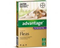 Advantage Cat Over 4kg Large 6 Pack
