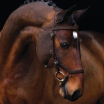 Micklem Competition Bridle Brown